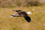 Coming in for a Landing at Albatross Airport