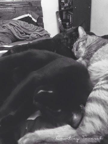Cats Black cat Ginger cat