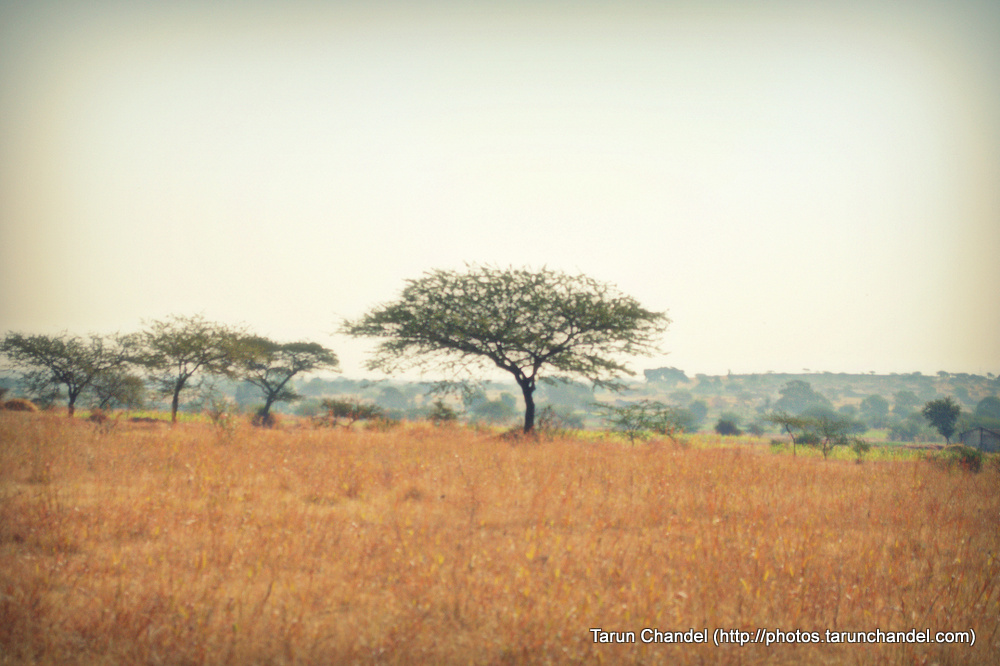 Zen Tree, Tarun Chandel Photoblog