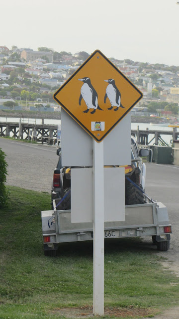 Another penguin crossing sign in Oamaru.