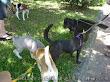 五隻狗一起散步很壯觀吧?這樣誰也不用留校察看。