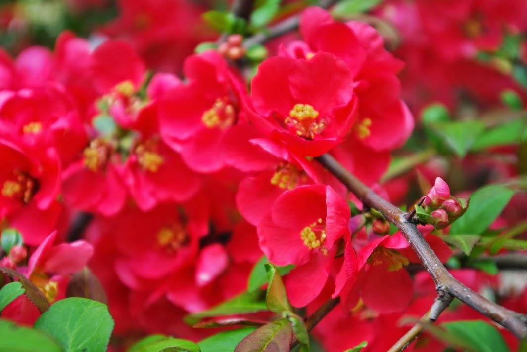 Молдавские цветы