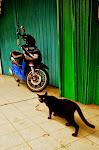 Czarny kot wspomniany w poprzedniej notce. Rano łazi, wieczorem leży na schodku.