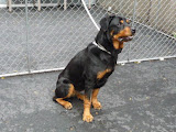 Grace- Sweet Grace was dumped at the shelter by her owners