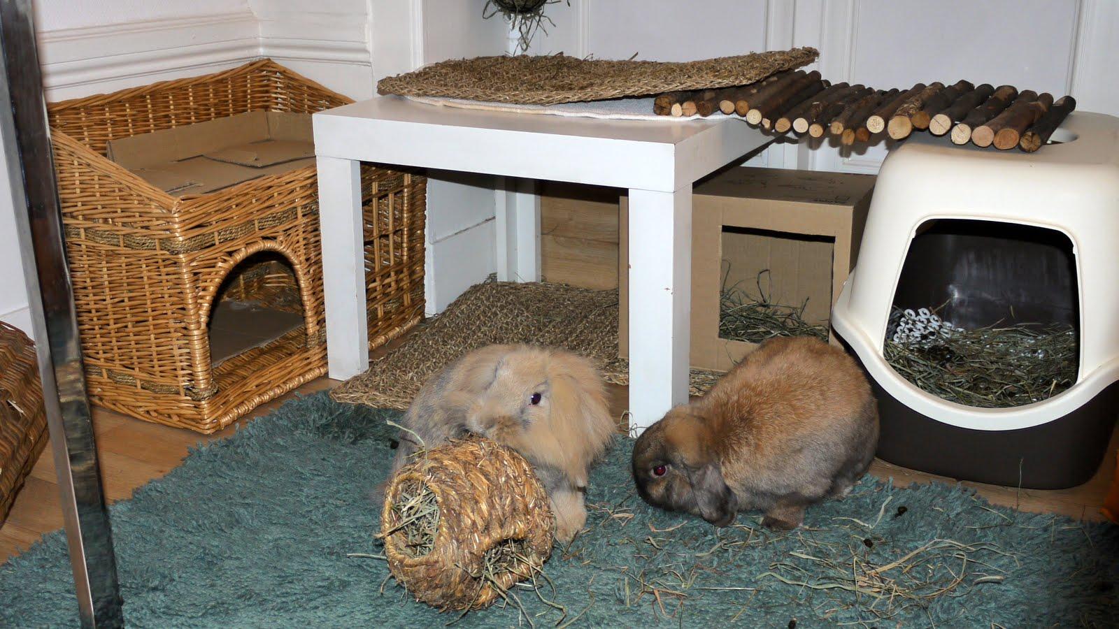 Что делать с кроликами в домашних условиях 693