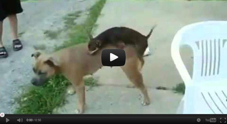 Смотреть смешные ролики про кошек смотреть в мире животных про кошки