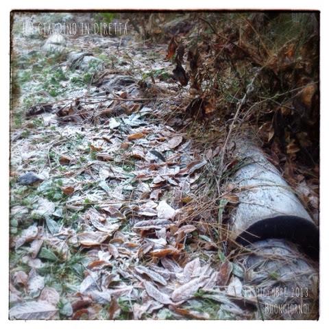 foglie secche di glicine e peonie nel gelo