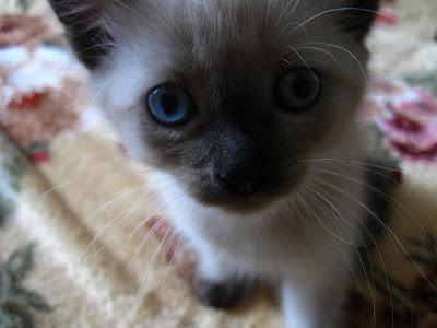 Кошка, фотография, вид сверху