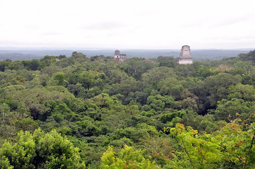 Tikal's temples rising from the Guatemalan jungle