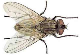 Foto de la mosca