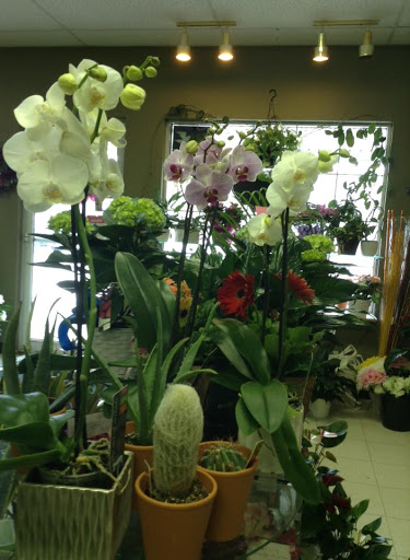 Thomas the Florist, LTD, 307 Connell St #2, Woodstock, NB E7M 1L3, Canada, Florist, state New Brunswick