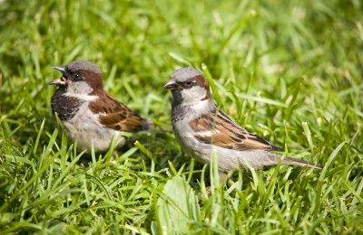 S for Sparrows