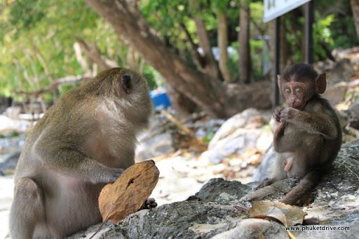 Фото обезьян на пляже 54