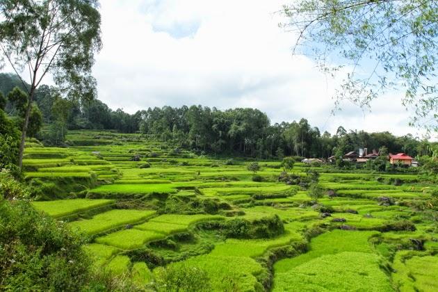 Scenic Tana Toraja Countryside