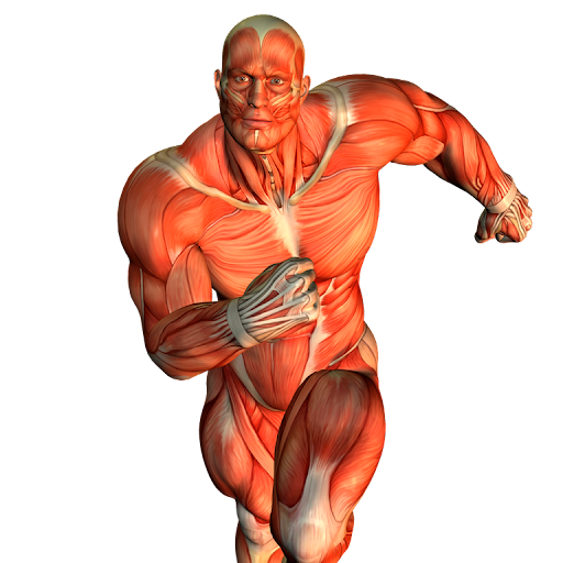 Fortalecimento muscular através do Kettlebell