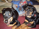 Sarah - Sarah now lives in the Poconos with her canine brother and human family