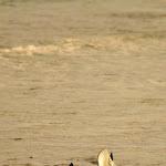 Eagle Ray na plaży na La Digue,