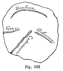 Défauts du bois : roulure, gerce, gélivure et cadranure