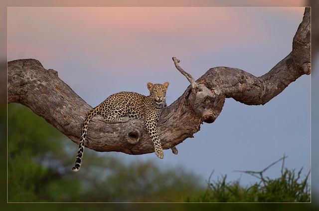 Animal Photography by Hennie van Heerden Seen On www.coolpicturegallery.us