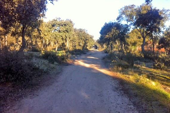 Ruta por el Monte de Boadilla