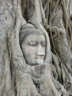Buddah Head in Tree