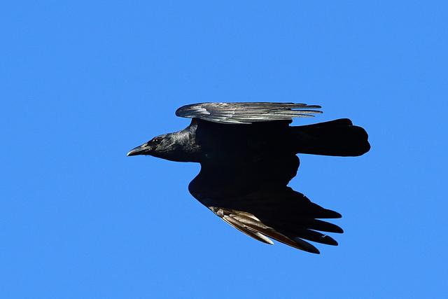 Birds Seen On www.coolpicturegallery.us