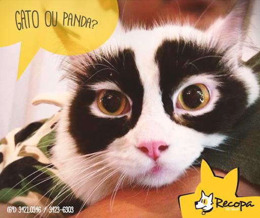 Recopa Pet Shop, Av. Brasil, 51 - Nova Brasília, Ji-Paraná - RO, 76908-354, Brasil, Loja_de_animais, estado Rondônia