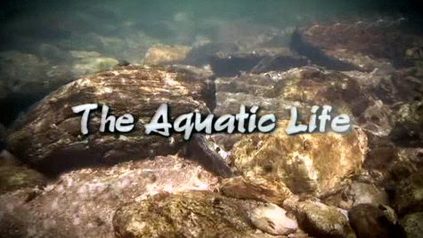 ¯yciodajna woda, The Acquatic Life