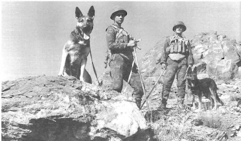 Afganistan saperzy z psami