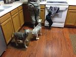 Susan's puppies