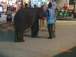 A cute baby elephant!