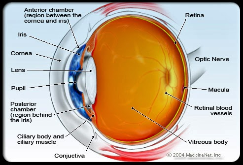 Health Tips: SARVENDRIANAAM NAYANAM PRADHANAM: COMMON EYE PROBLEMS IN ELDERLY PEOPLE