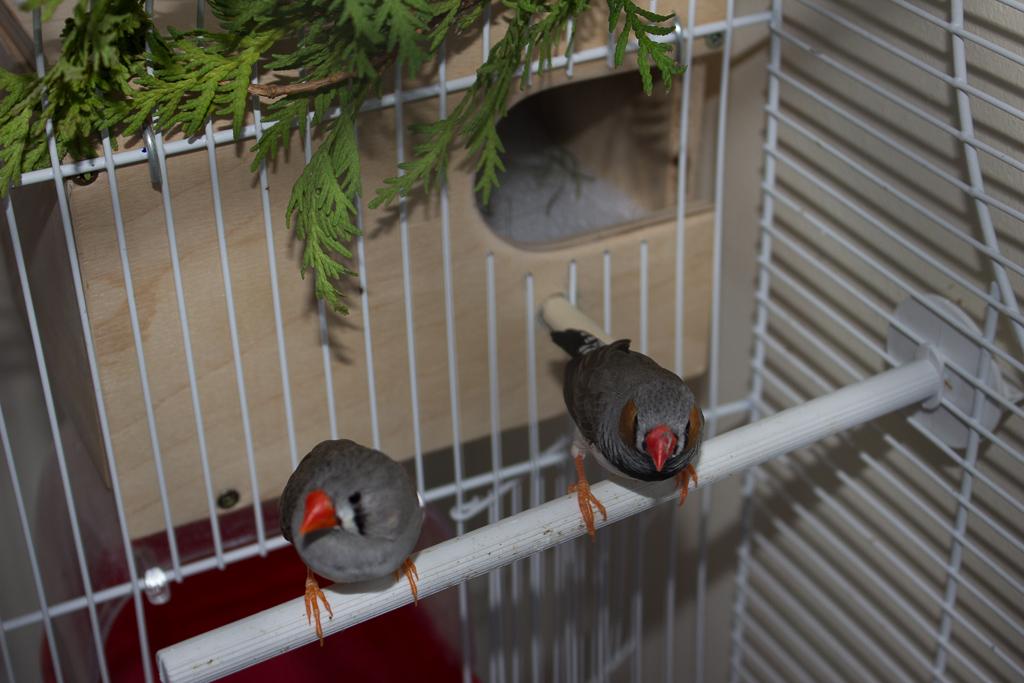 Видео как сделать гнездо для амадинов своими руками