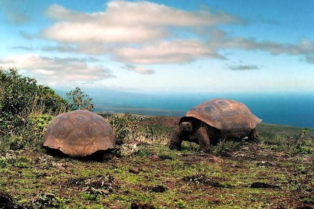 Animals - Galapagos Island Seen On www.coolpicturegallery.us