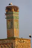 The 13th Century Minaret is Now A Nest For Storks - Rabat, Morocco