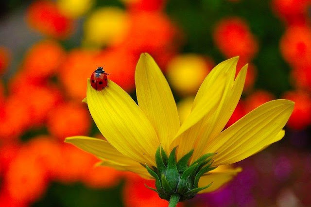 Colourful Flowers Seen On www.coolpicturegallery.us