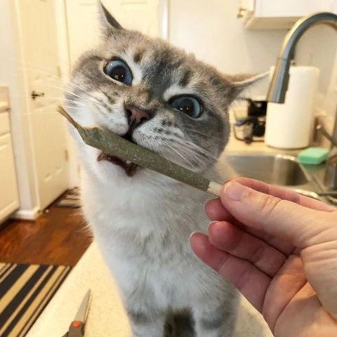 David Dung