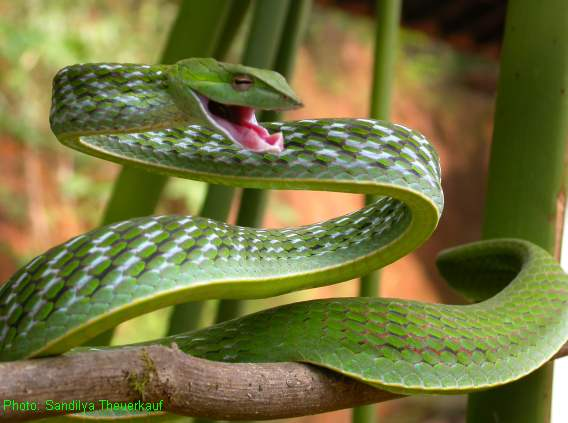 Cool Animals Pictures One Of The Most Cool Snakes