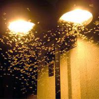 Dicas insetos agua piscina
