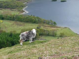Heres looking at ewe