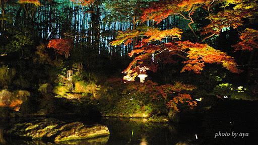 龍心池付近のライトアップ2