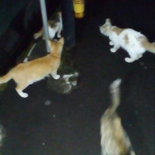 Susu Untuk Kucing Zona Kucing