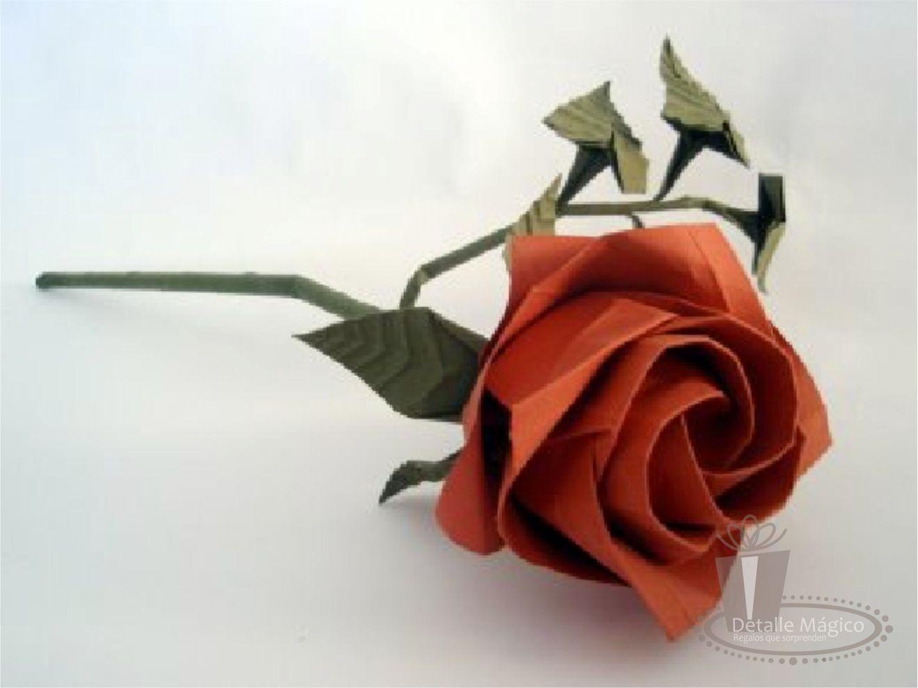 Шефлера цветок уход в домашних