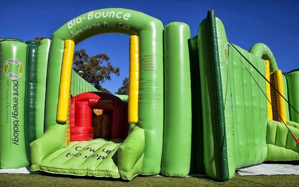 Bio-Bounce