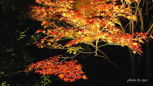 青蓮院門跡のライトアップ3