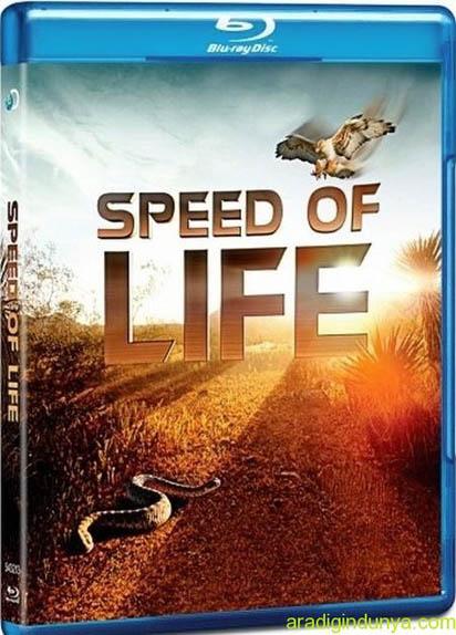 Zwierzêta Cczego Nie Widaæ / Speed of Life (2010) PL.1080i.HDTV.x264 / Lektor PL