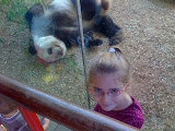 While J&L were are camp, M&B went to the zoo. Pandas are a big fave at Zoo Atlanta.