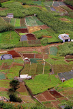 Farms of Camara de Lobos - Funchal, Madeira