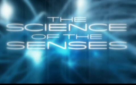 Natura Zmys��w / Science of the Senses (2008)  PL.TVRip.XviD / Lektor PL