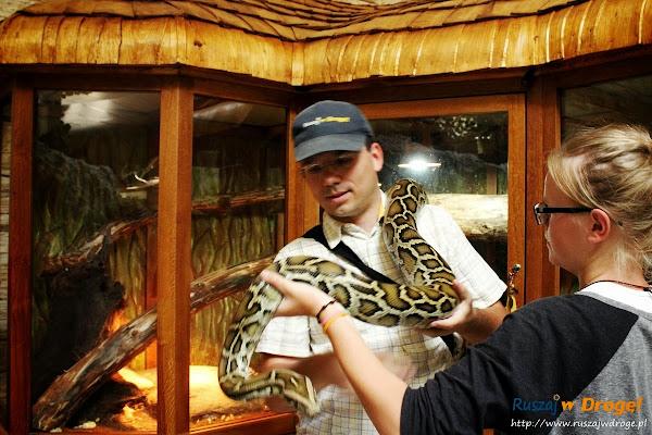 kaszuby Tuchlino - park zoo-egzotyczne - Maciej z wężem